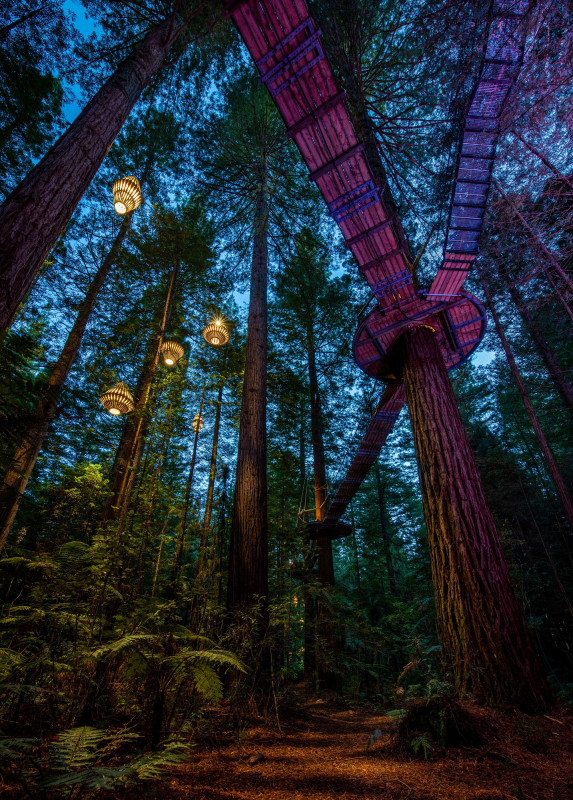 Redwoods Nightlight Treewalks